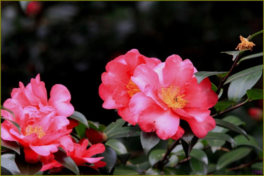 タヒバリ  どこにいても保護色です。  2011.11.27埼玉県_a0146869_1982712.jpg