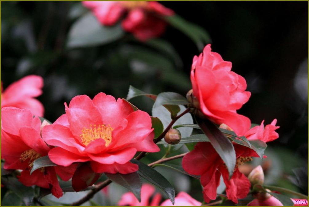 タヒバリ  どこにいても保護色です。  2011.11.27埼玉県_a0146869_1984510.jpg
