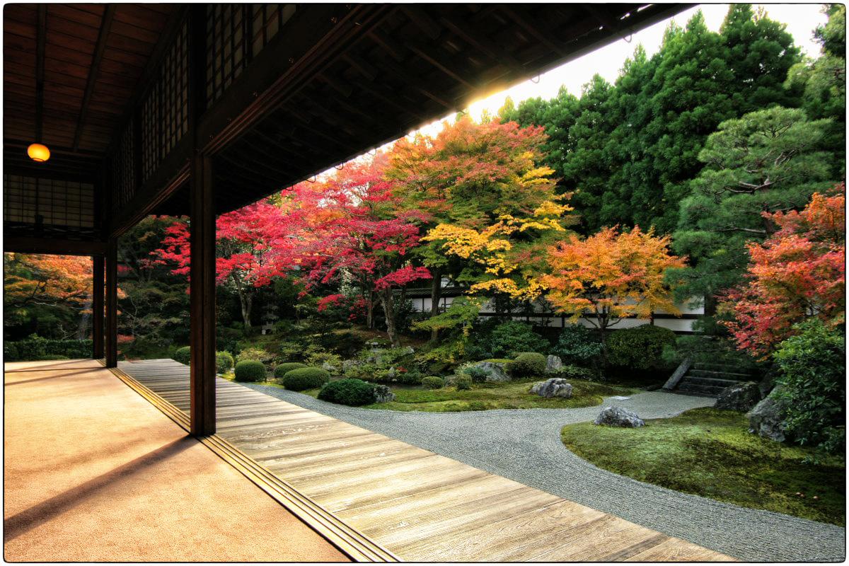 紅葉 2011  京都東山  <泉涌寺>_f0021869_19504079.jpg