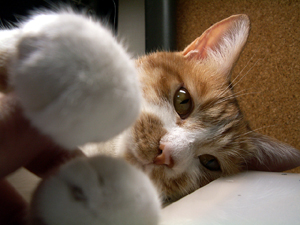 猫絡み_a0001971_0571542.jpg
