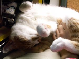 猫絡み_a0001971_057443.jpg