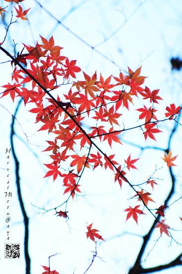 秋色~曇り空_b0208495_002868.jpg