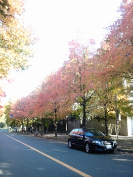秋ですね~~~_c0182100_1772939.jpg