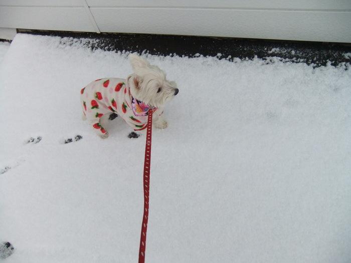 雪やコンコン_c0226202_13325510.jpg