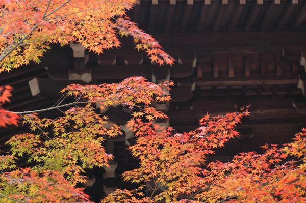 本土寺へ_c0051105_0392753.png