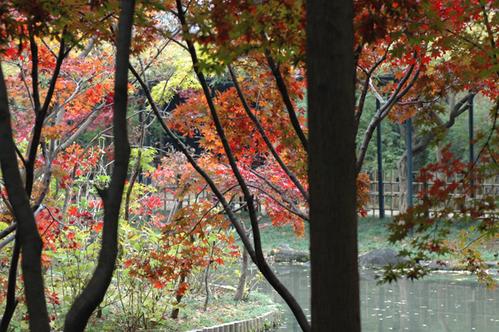 本土寺へ_c0051105_053272.png