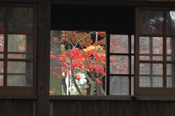本土寺へ_c0051105_056299.png