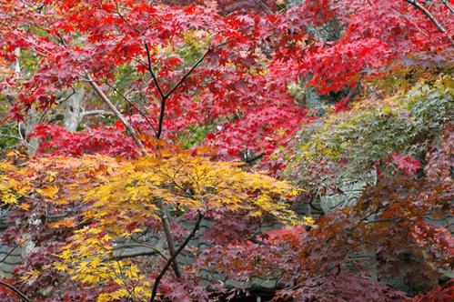 本土寺へ_c0051105_111379.png