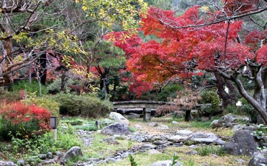 八坂神社から円山公園・長楽寺 紅葉を求めて_e0048413_22215983.jpg