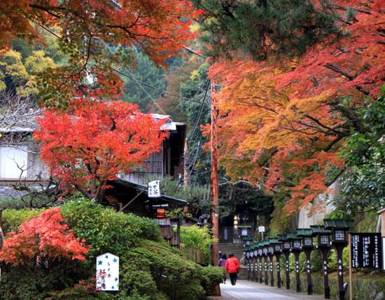 八坂神社から円山公園・長楽寺 紅葉を求めて_e0048413_22223544.jpg