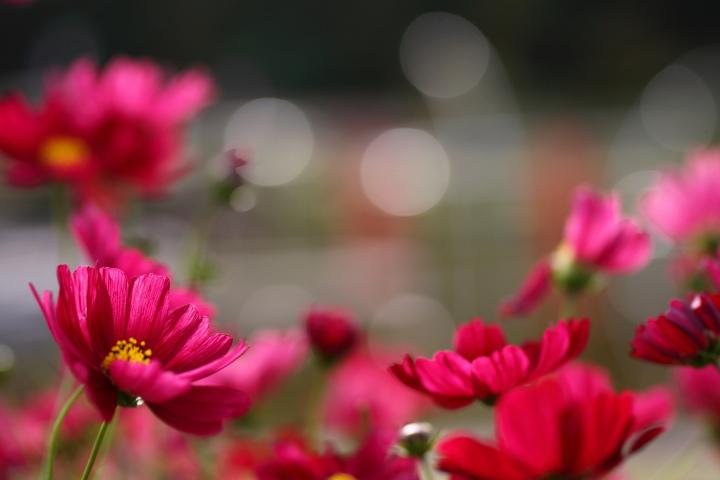 Flowers_e0169421_2164543.jpg