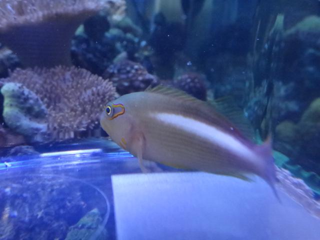 海水魚・サンゴ・水草・淡水魚_f0189122_13115993.jpg