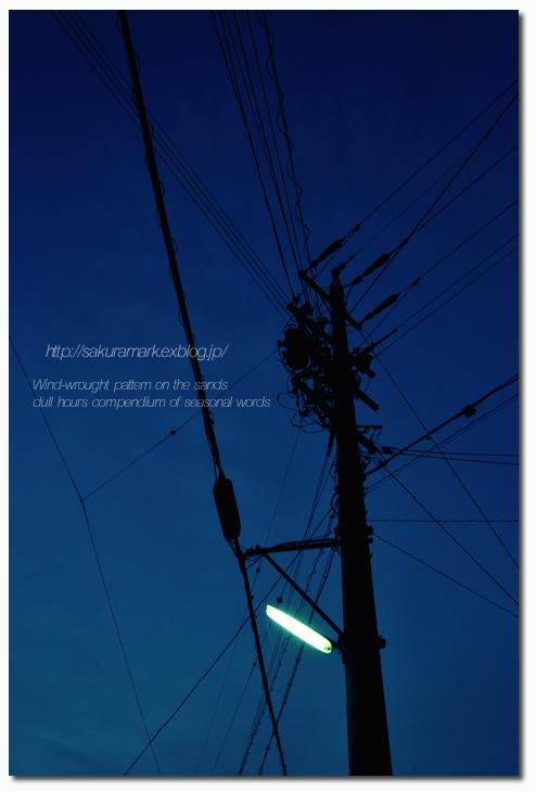 街灯輝く夕闇。_f0235723_20424578.jpg