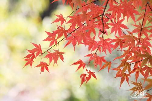 209 野呂山 ~瀬戸内の紅葉~_c0211532_20134017.jpg