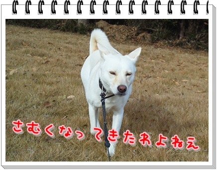 f0195543_223015100.jpg