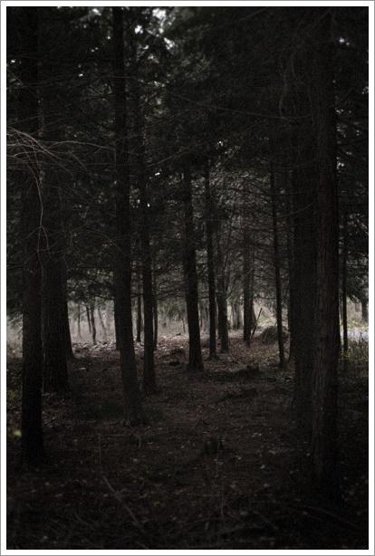 日暮れの森で_c0157248_04037100.jpg