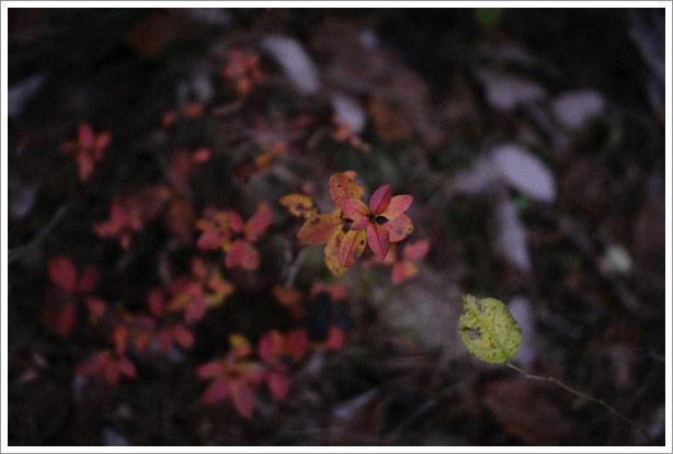 日暮れの森で_c0157248_0405166.jpg