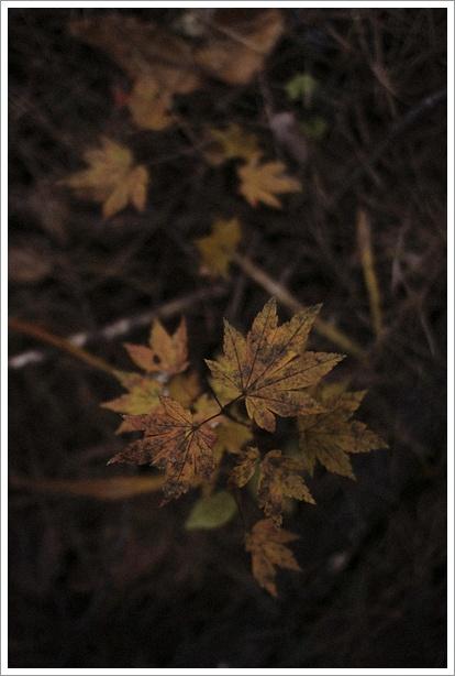 日暮れの森で_c0157248_041598.jpg