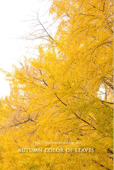 横浜の紅葉。_d0124248_20144769.jpg