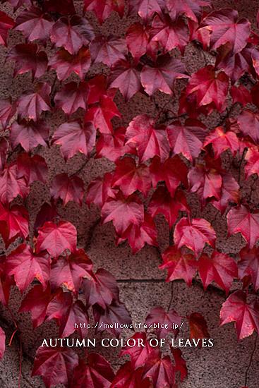横浜の紅葉。_d0124248_20294265.jpg