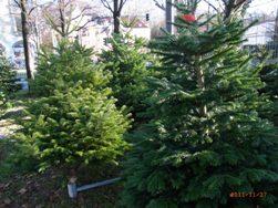クリスマスマーケットをはしご_e0195766_6233216.jpg