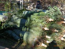 クリスマスマーケットをはしご_e0195766_6234589.jpg