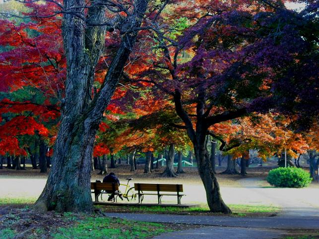 都立野川公園の晩秋 その1_e0165983_17164240.jpg