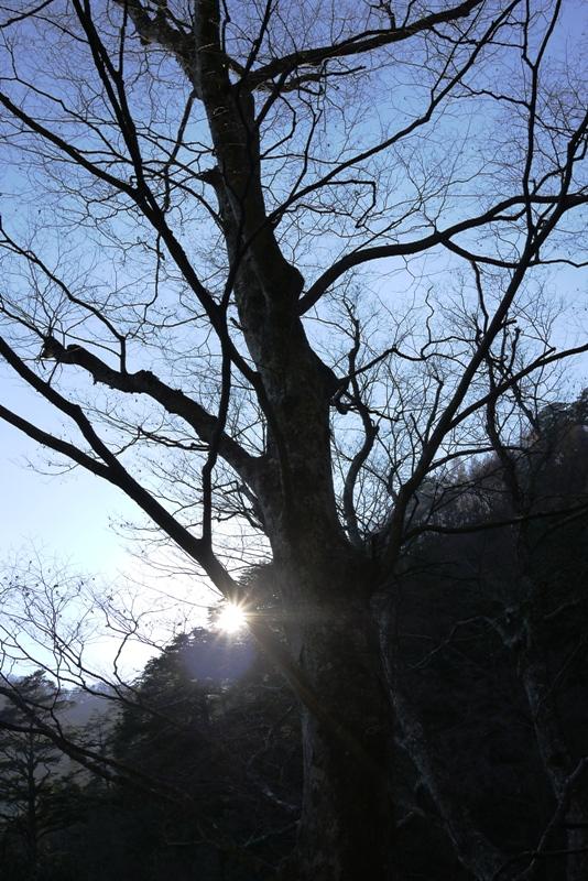 三頭山③_a0127090_1446122.jpg