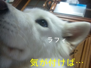 d0148408_167023.jpg