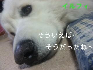 d0148408_167073.jpg