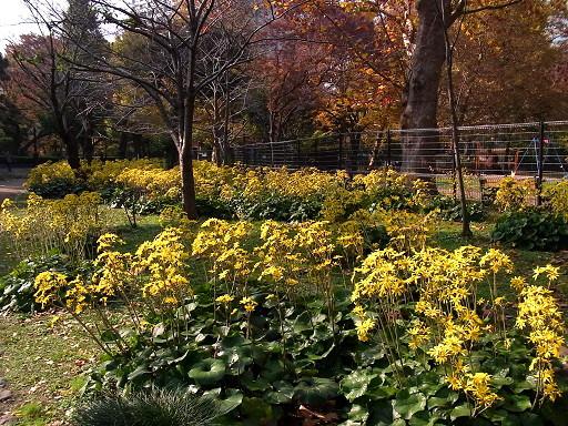 秋色の日比谷公園_c0192215_1663762.jpg