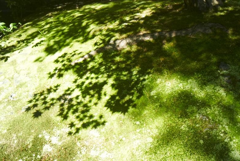 日本で一番美しい庭園_b0212922_13222499.jpg