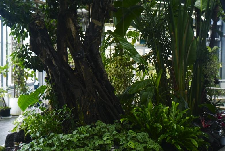 どこにいっても必ず植物園_b0212922_13381323.jpg