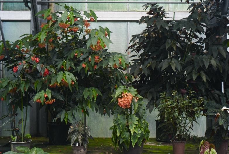 どこにいっても必ず植物園_b0212922_13485881.jpg