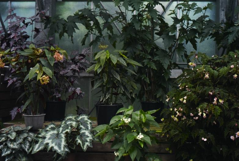 どこにいっても必ず植物園_b0212922_13492420.jpg