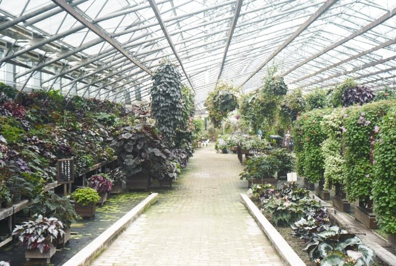 どこにいっても必ず植物園_b0212922_13494057.jpg