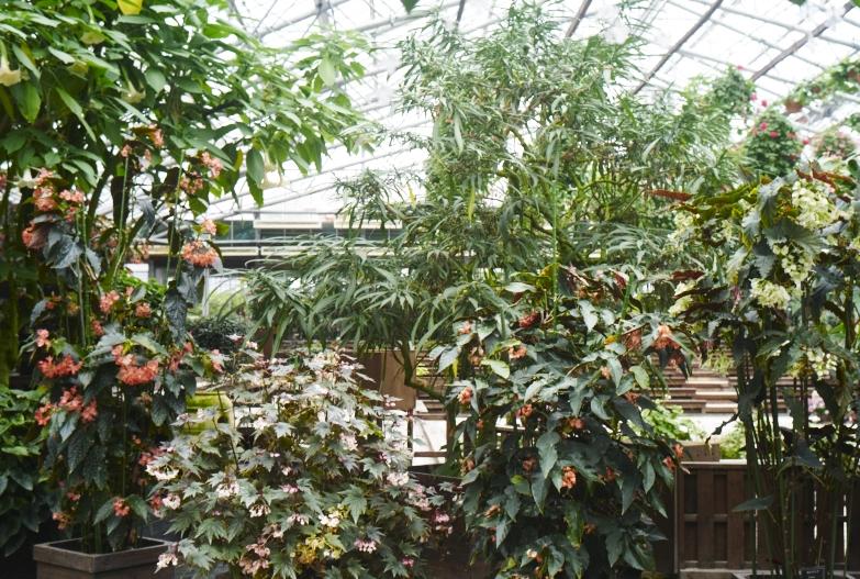 どこにいっても必ず植物園_b0212922_13495569.jpg