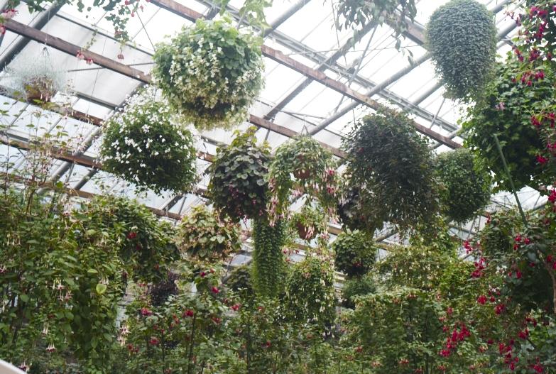 どこにいっても必ず植物園_b0212922_1350751.jpg