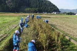 服間小学校の大豆収穫_e0061225_11481050.jpg