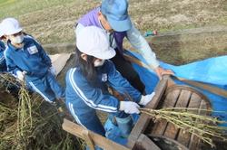 服間小学校の大豆収穫_e0061225_11523076.jpg