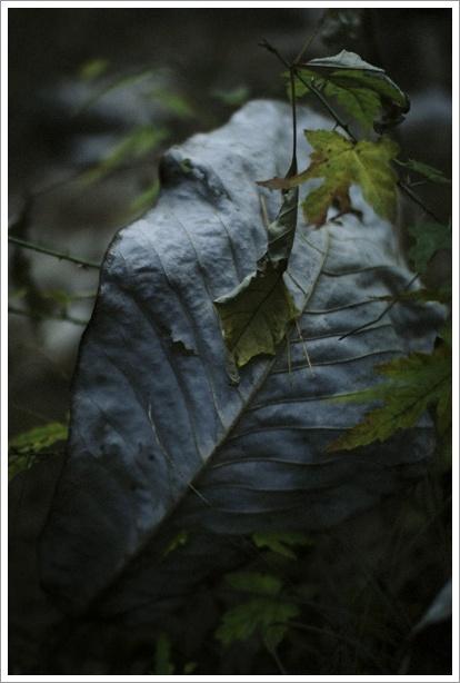 暗い森の中_c0157248_23574818.jpg