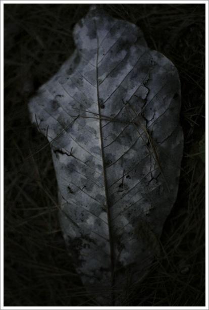 暗い森の中_c0157248_23575730.jpg