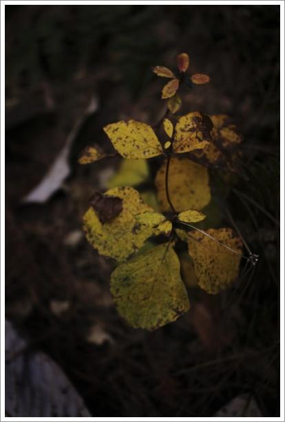 暗い森の中_c0157248_23581519.jpg