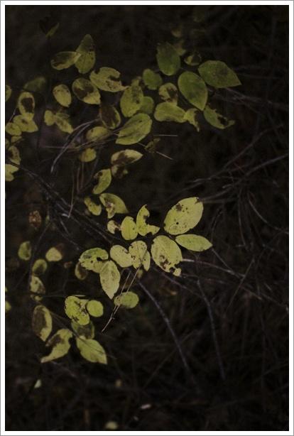 暗い森の中_c0157248_2358723.jpg