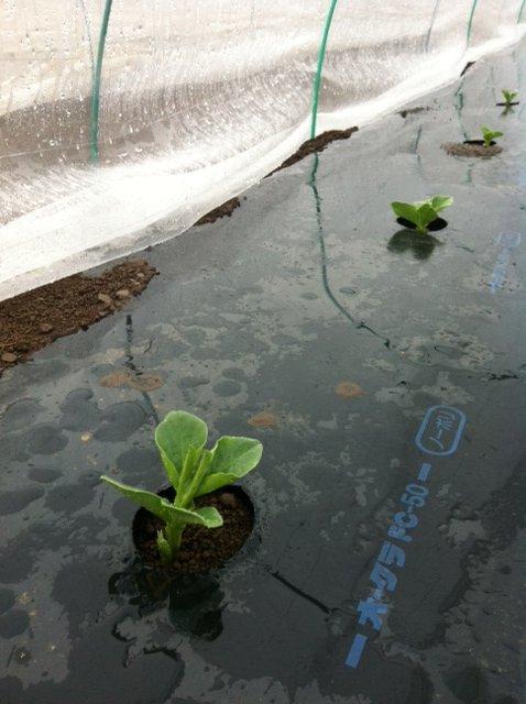 気温5℃・・畑は雨・・手がしびれてきました_c0222448_1521182.jpg