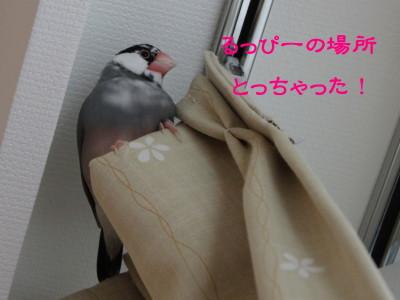 b0158061_18135465.jpg