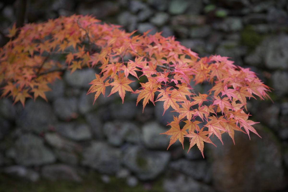 紅葉 2011_f0021869_23263914.jpg