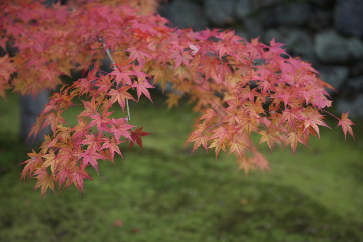 紅葉 2011_f0021869_23271925.jpg