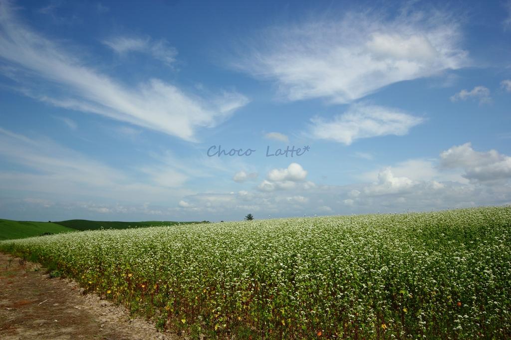 空と大地と風と旅 ♪_b0206470_2145583.jpg