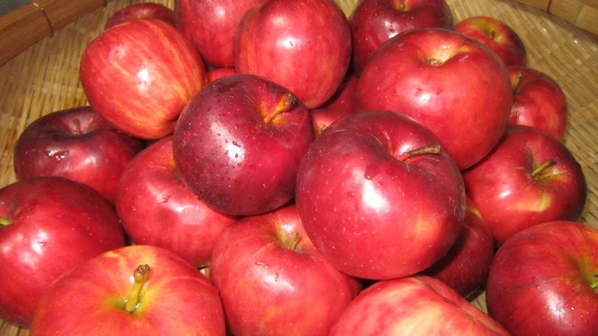 不揃いのリンゴたちのジャム_b0214473_14593314.jpg